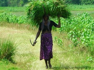 Lady hauling grass